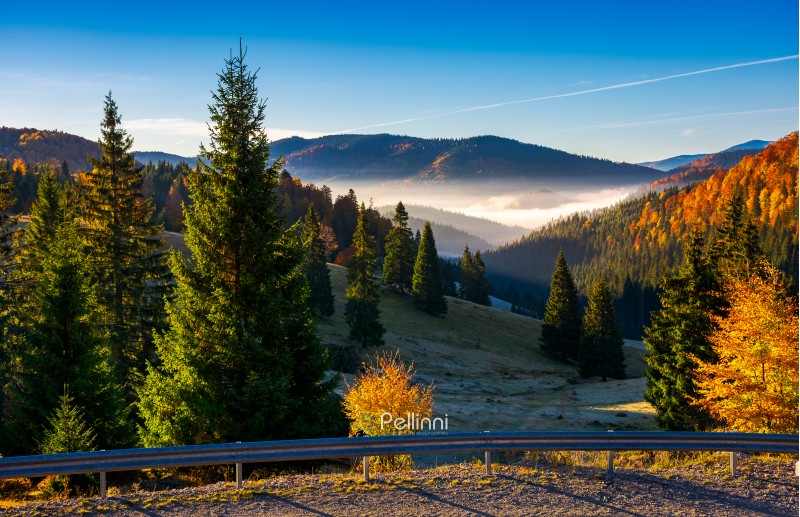 Balileasa valley of Apuseni mountains. gorgeous autumn sunrise with glowing fog among the spruce forest. Bihor mountain in the distance. beautiful travel destination of Romania
