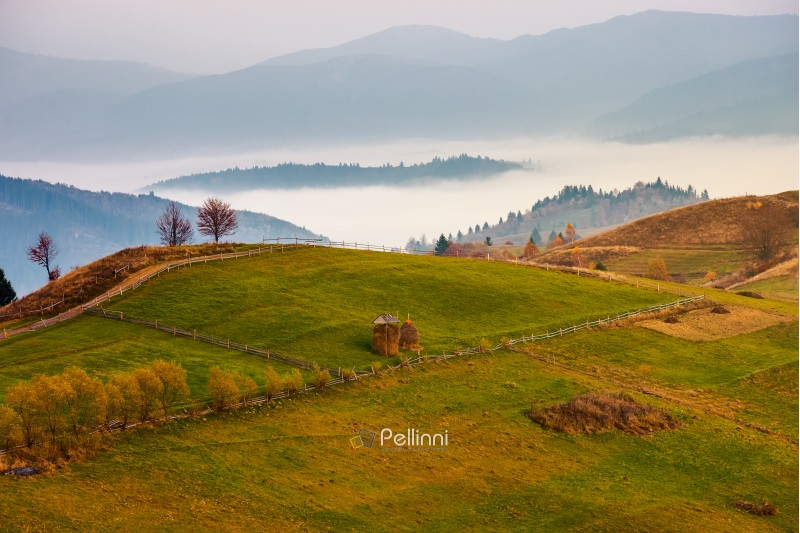 Carpathian rural area in autumn at dawn. leafless trees by the road. haystacks on the grassy meadow. fog in the distant valley behind the hill. gorgeous countryside scenery