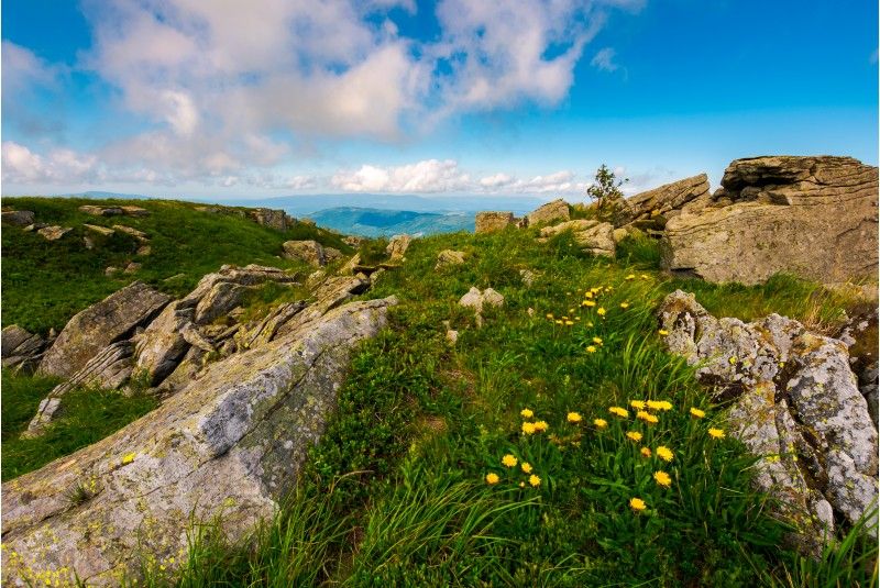 Dandelions among the rocks in Carpathian Alps. Heavy cloud on a blue sky over the mountain peak in the distance.  Vivid summer landscape at sunset.