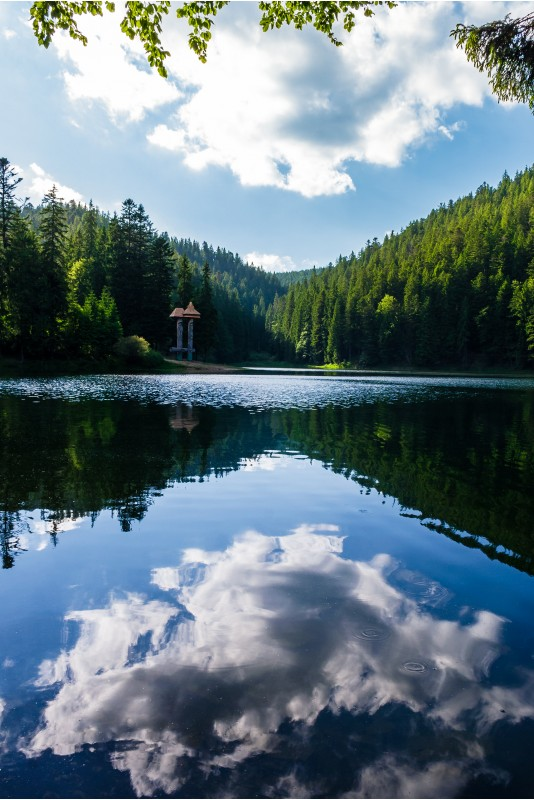 Synevyr lake on summer evening. beautiful scenery among the forest. reflection of a cloud in a rippled water surface
