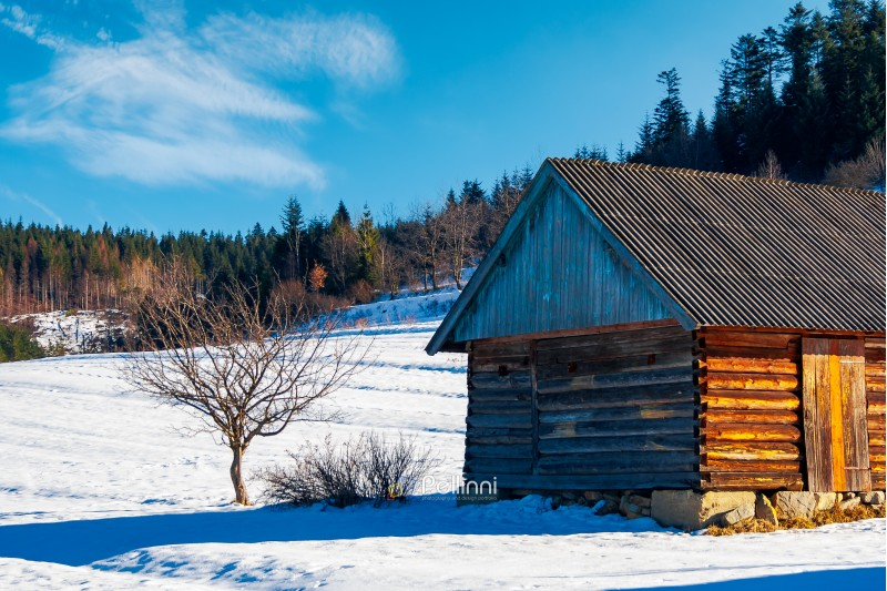 abandoned barn in Carpathian mountains. beautiful sunny winter weather