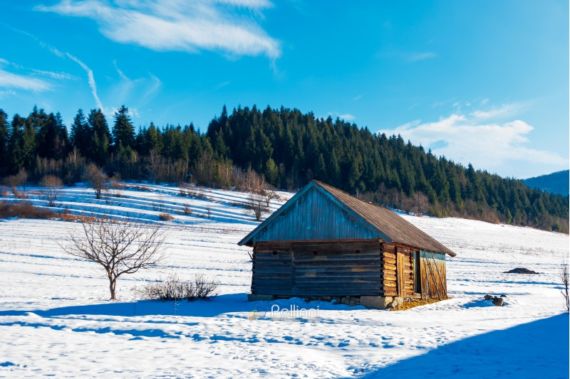 abandoned barn in Carpathian mountains. beautiful sunny winter weather. spruce forest in the distance
