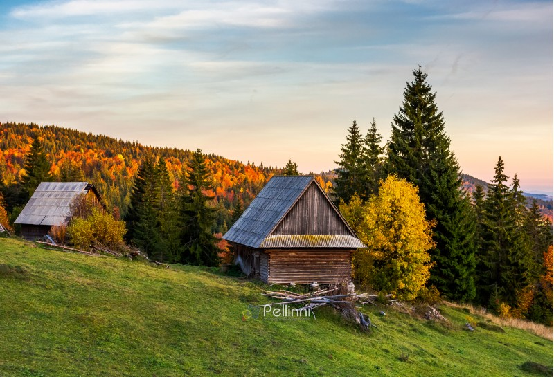 abandoned woodshed in forest. beautiful autumn landscape of Apuseni mountains. lovely nature scenery at sunset