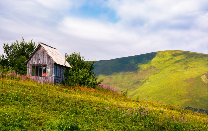 abandoned woodshed on grassy hillside. beautiful summer scenery with purple flowers in mountains