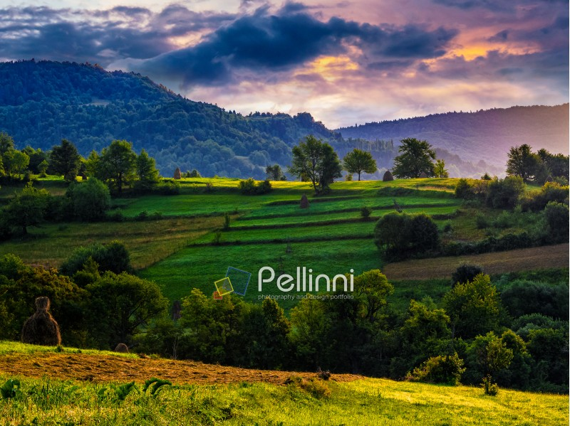 agricultural fields with haystacks on hills in mountainous rural area at sunrise. dramatic countryside landscape