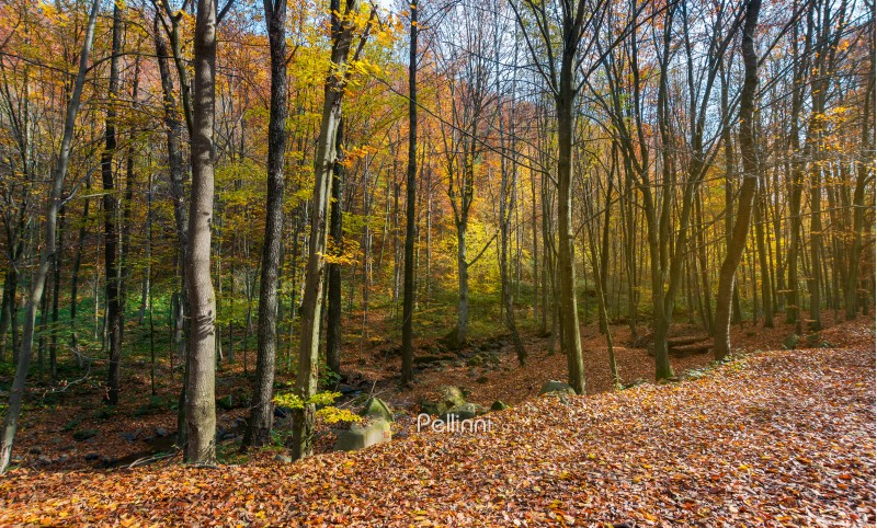 almost leafless forest in autumn. beautiful nature background