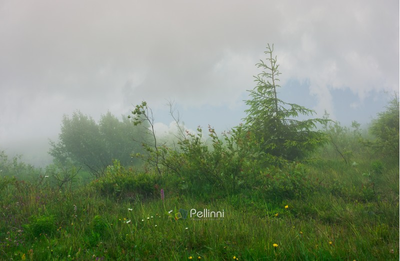 alpine meadow in fog and mist. beautiful and mysterious scenery inside the cloud.