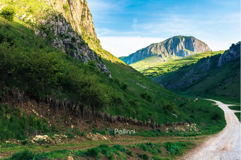 amazing countryside in romania mountains. huge cliffs above grassy meadows. cattle of cows grazing in  the distance. road in to the gorge. beautiful landscape in springtime at sunrise