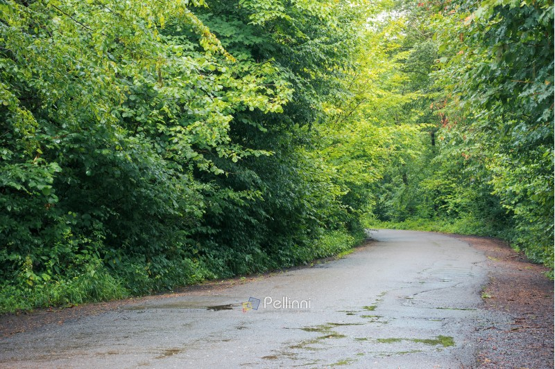 asphalt country road through forest. transportation background. summer nature scenery