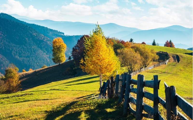 beautiful autumn countryside in mountains. wooden fence along the road through grassy hills. carpathian rural area. beautiful sunny weather