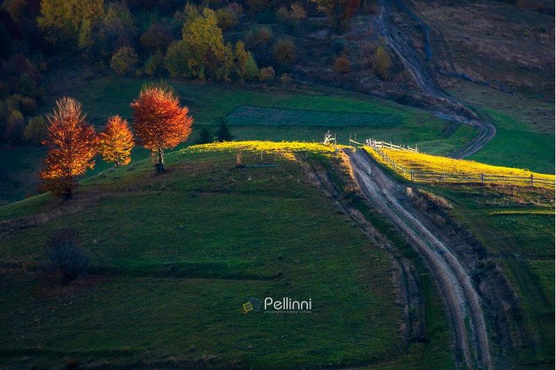 beautiful autumn countryside in mountains. wooden fence along the road uphill. drop of light on red trees at sunrise. carpathian rural area. beautiful sunny weather