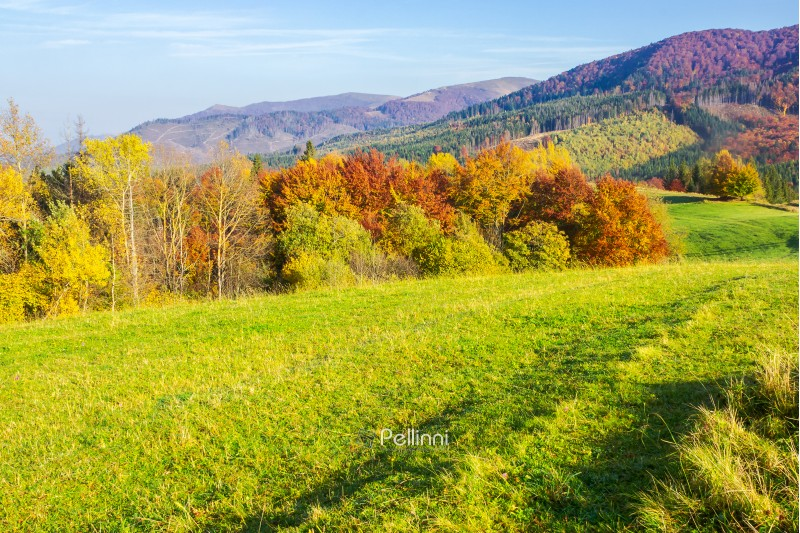 beautiful autumn landscape in mountains. green grass on the meadow. yellow and red foliage on trees. sunny forenoon