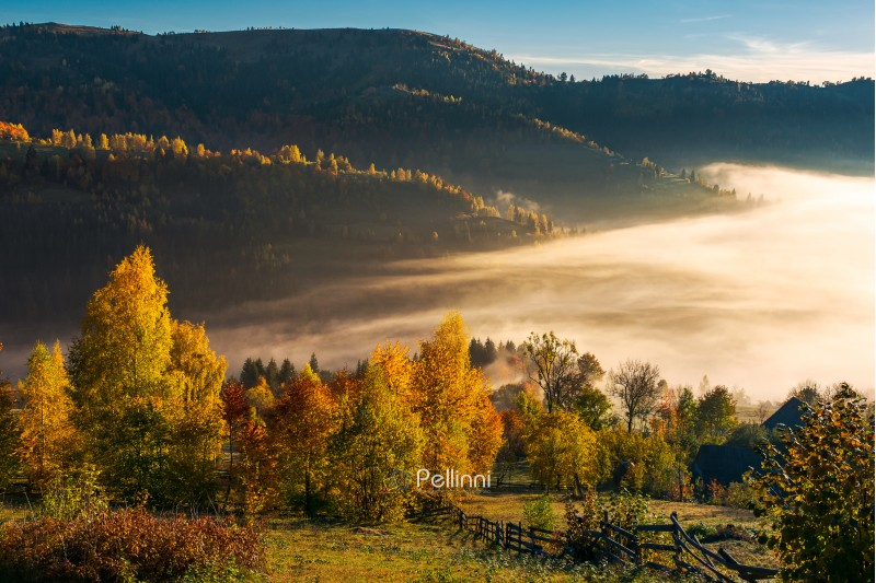 beautiful countryside in autumn at sunrise. trees in colorful foliage. fog in the valley above the village