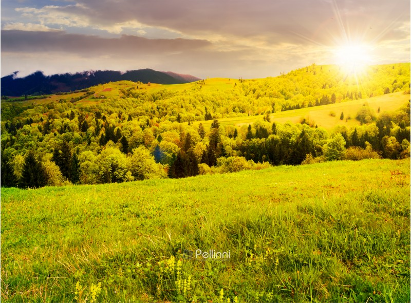 beautiful mountainous countryside in springtime at sunset. grassy meadows and forested hill. freshness of nature concept