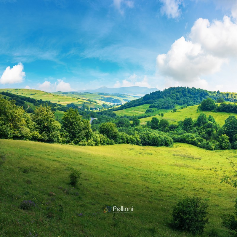 beautiful countryside summer landscape. forested rolling hill with grassy meadow. village in the valley. blue sky with fluffy clouds. mountain ridge in the distance. sunny weather