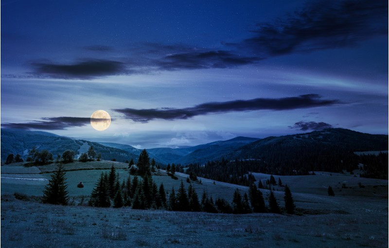 beautiful countryside summer landscape at night in full moon light. spruce trees on a rolling grassy hills at the foot of Borzhava mountain ridge. Fine weather with some clouds on a blue sky