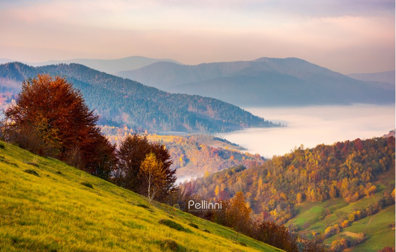 beautiful dawn in mountainous autumn landscape. red foliage on trees and fog in the distant valley