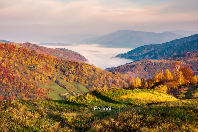 beautiful landscape at foggy autumn sunrise. red foliage on forested hills. cloud inversion in distant valley. beautiful season colors