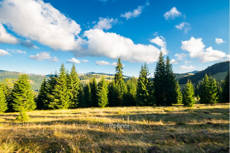 beautiful landscape of Apuseni mountains in autumn. spruce forest on a grassy hill. gorgeous cloudscape above the ridge. travel Romania discover europe concept