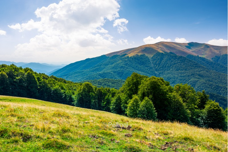 beautiful landscape of Carpathian mountains. forested hills and Apetska mountain in the distance in summer