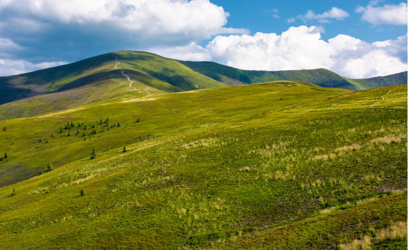 beautiful landscape of Carpathian mountains. grassy hills of Borzhava ridge under the blue sky with fluffy clouds