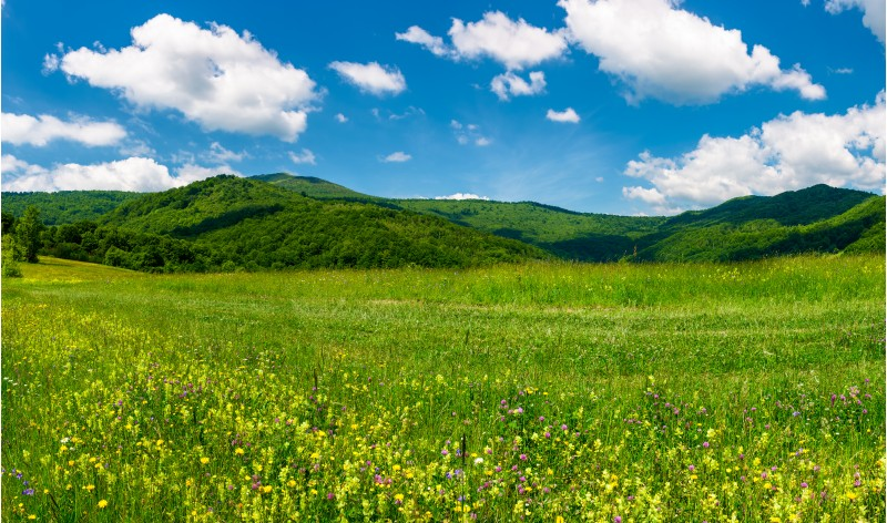 beautiful landscape with meadow in mountains. wild herbs on the ground and some clouds on a blue sky. gorgeous summer scenery