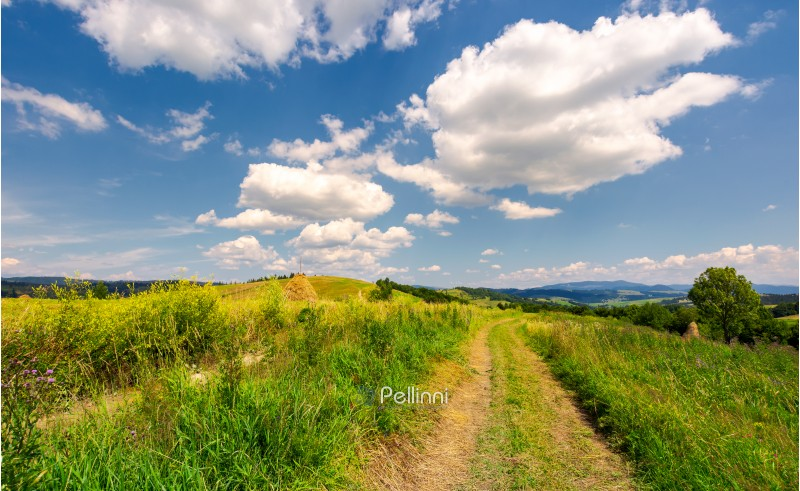 beautiful rural landscape in mountains. lovely summer scenery. road through agricultural field under the blue sky with fluffy clouds
