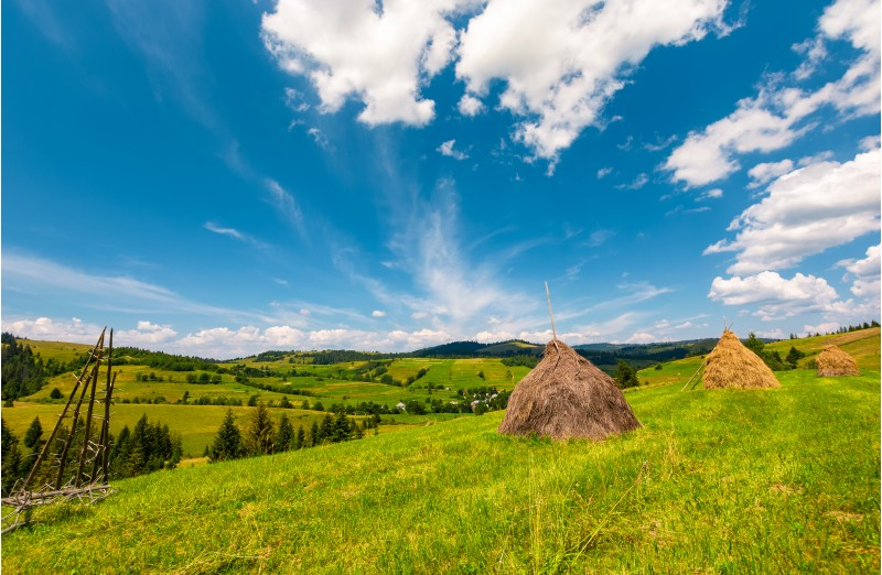 beautiful rural scenery in mountains. haystacks on a grassy hillside near the forest on a rolling hills. fine weather with some fluffy clouds on blue summer sky