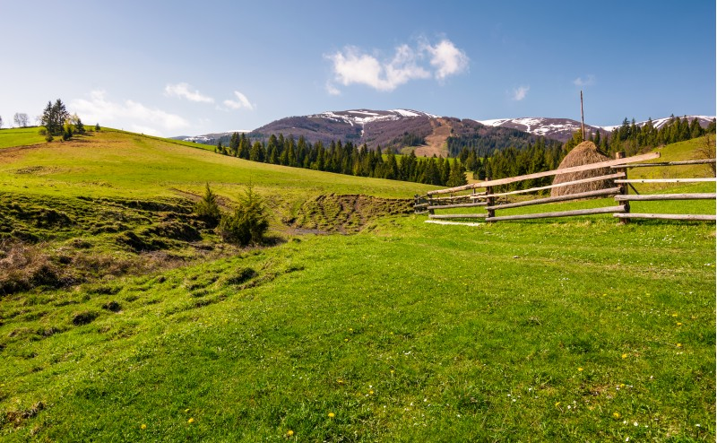 beautiful rural scenery in springtime. wooden fence and haystack on a grassy hillside at the foot of Borzhava mountain ridge with snowy tops.