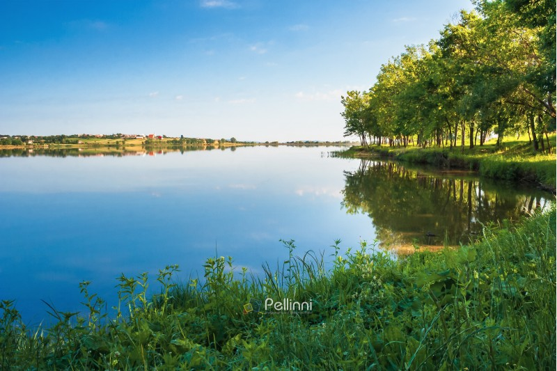 beautiful summer scenery near the lake. trees on the grassy shore in morning light. village on the other side. wonderful sunny summer weather with azure sky