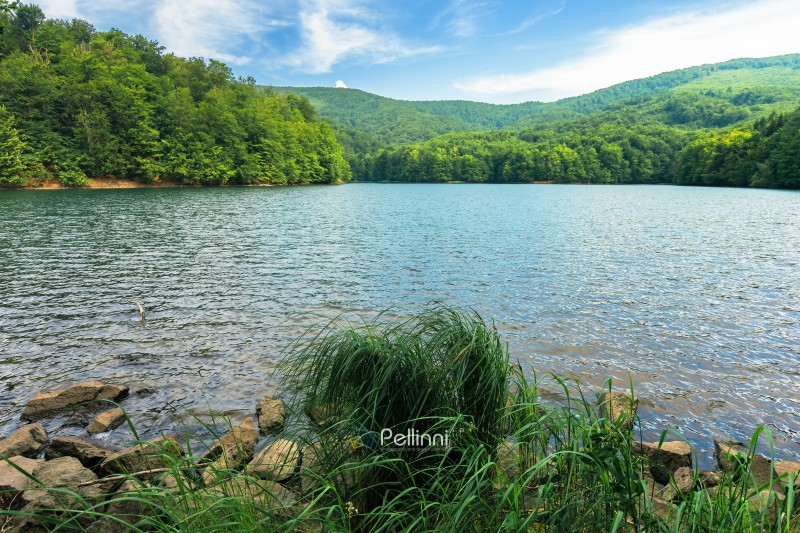 beautiful summer scenery near the mountain lake. beech forest and rocks among tall grass on the shore. sunny and windy weather and crystal clear water