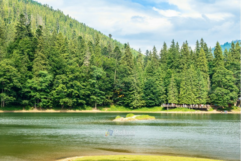 beautiful summer scenery of the synevyr lake. pier among the coniferous forest on the shore. popular travel destination of carpathian mountains. sunny weather with cloudy sky