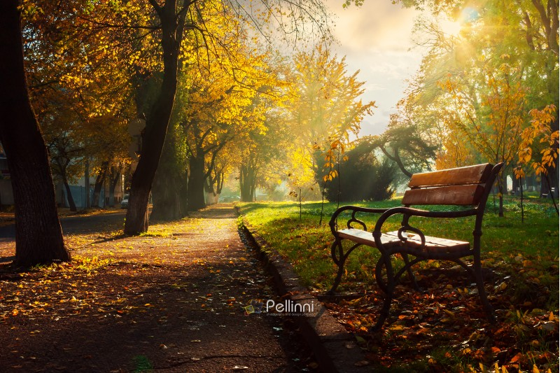 bench in the autumn city park. beautiful empty morning scenery
