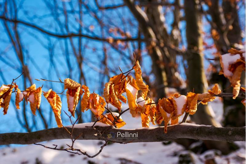 brown foliage on the branch in winter. beautiful nature background