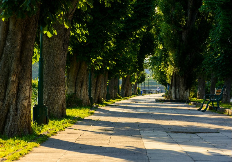 chestnut alley with benches in summertime. beautiful urban scenery in the morning