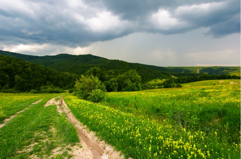 country road down the hill through the field. lovely countryside scenery in mountainous area before the summer storm