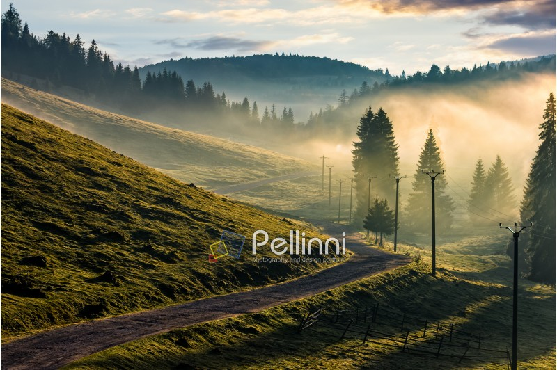 country road through foggy spruce forest on grassy hills. spectacular countryside landscape in mountains at sunrise