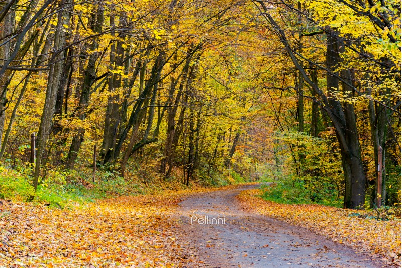 country road through forest in yellow foliage. wonderful transportation scenery in autumn