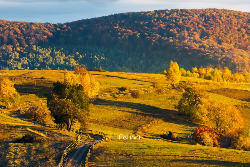 country road through rural fields on hill. lovely autumn weather. forest in colorful foliage