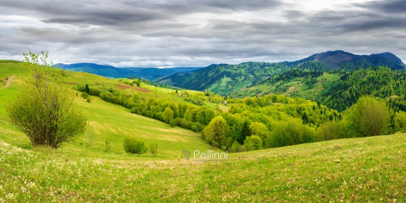 panorama of countryside in mountain on a cloudy day. beautiful landscape in springtime