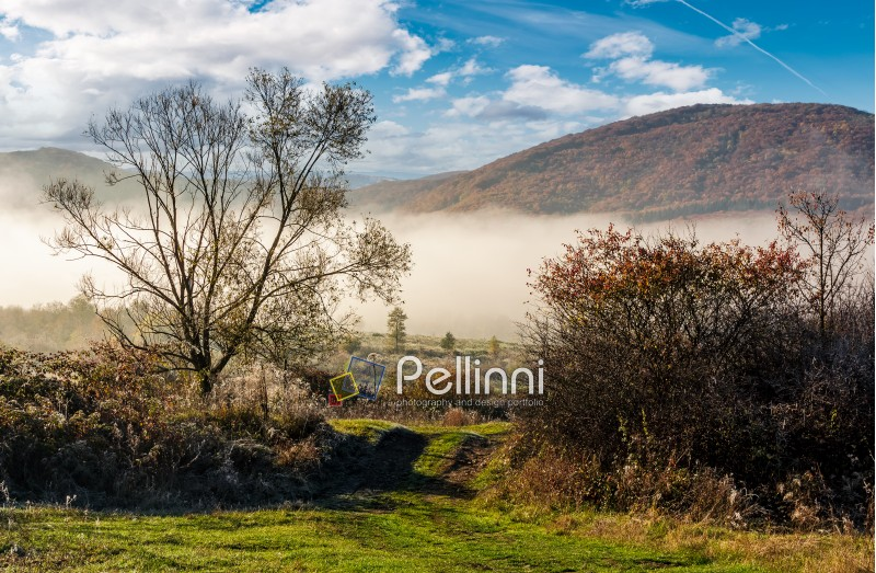 countryside on foggy morning. naked trees with slightly visible mountain in a distance. beautiful nature scenery in november