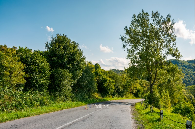 countryside road through forest in mountains. lovely transportation scenery in early autumn afternoon