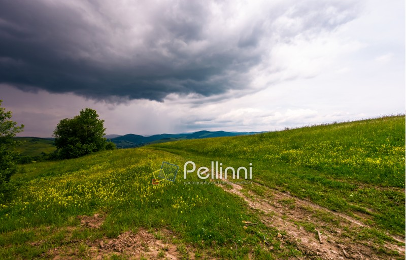 countryside road through grassy field. beautiful mountainous landscape of Carpathians before the storm