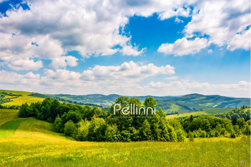 countryside summer landscape in mountains on fine weather day. grassy rural field near the forest on a hillside under blue sky with some clouds