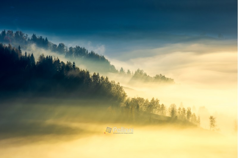 deep fog above the valley at sunrise. beautiful autumn background in mountains. lovely nature abstract scenery