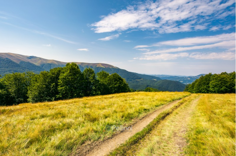 dirt road through alpine meadow among beech forest. wonderful summer landscape. distant mountain ridge beneath a blue sky with clouds