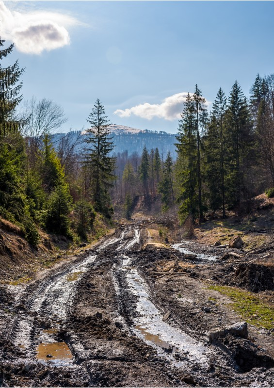 dirt road through cutting in forest. ecological disaster of Carpathian forests.
