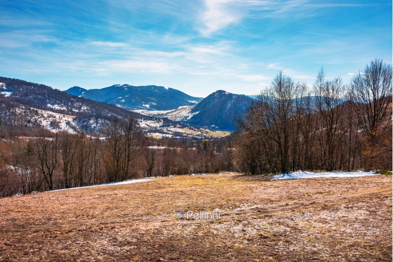 early springtime in mountainous countryside. leafless trees on the meadow with weathered grass and spots of snow. spring is coming. sunny weather