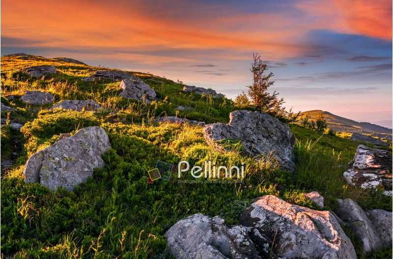 epic landscape of Carpathian high mountain ridge. lonely spruce tree among huge rocks on grassy hillside. gorgeous vewpoint with hills and peaks in the distance. spectacular scenery with blue sky and clouds in summer time