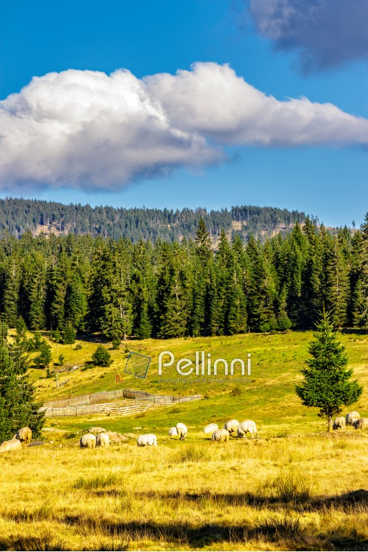 rural landscape with flock of sheep on the hillside meadow at the foot of the mountain in Romania